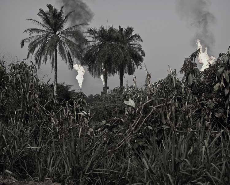 Christian Lutz - aus: Tropical Gift