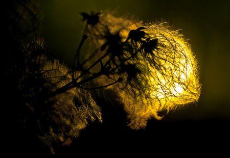Low Key Pflanzenblüte: Das Licht der Welt