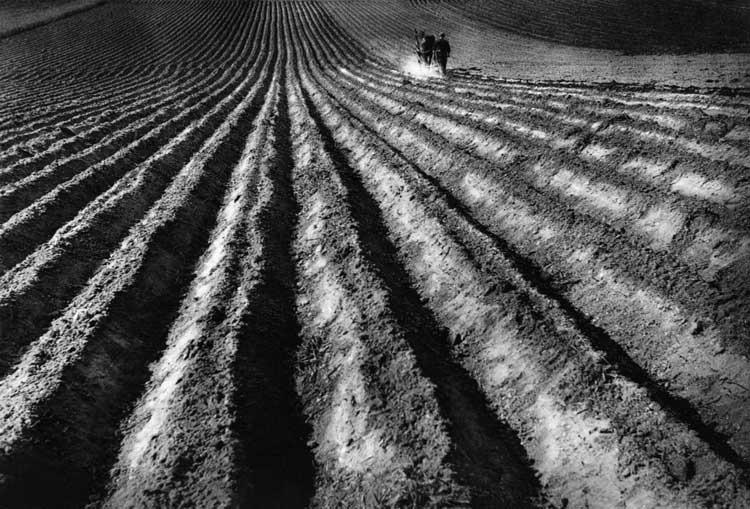 Acker_1950 © Robert Haeusser