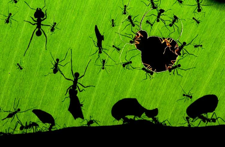 Bence Máté: A marvel of ants