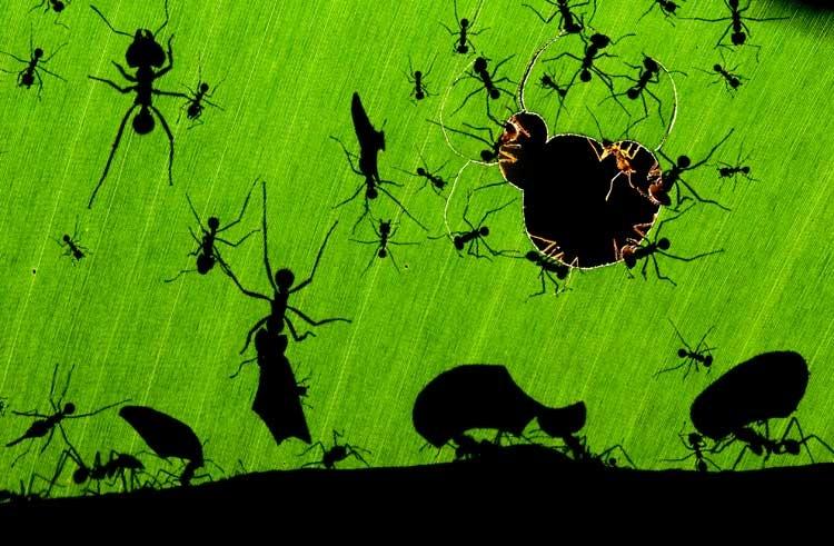 Beste Wildlife-Fotos 2010: Wunderwerk der Ameisen