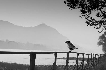 Naturfotografie: Der Rabe