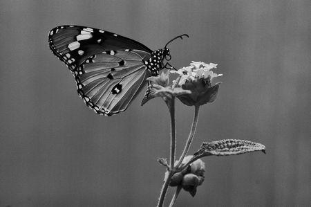 Schwarzweiss-Schmetterling: Fotografie lebt auch von Formen