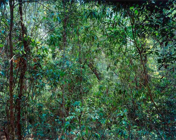 Thomas Struth: Paradise 09 (Xi Shuang Banna) Provinz Yunnan