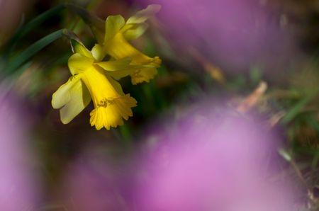 Blumenbild: Verborgener Blick