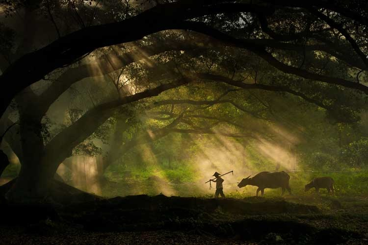 World Photography Awards 2011: Die Amateur-Gewinner