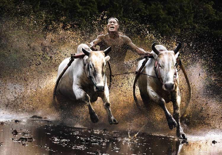 Buffalo Race © Chan Kwok Hung