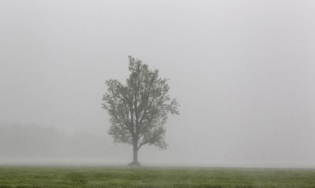 Einsamer Baum in den Flutgebieten der USA (keystone)
