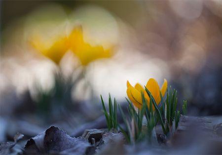 Blumenbild: Zeitdimension durch Bokeh
