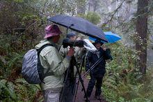 Regenfotografen in Nordkalifornien...