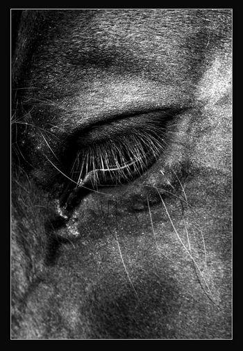 Leserfoto: Klick für Vollansicht (© Beate Schefthaler).
