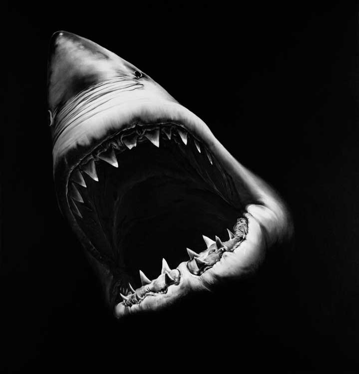 Robert Longo: Untitled (Shark), 2010. 