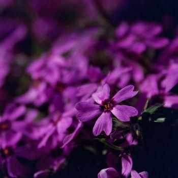 Blumenbild: Freistellung und Redundanz