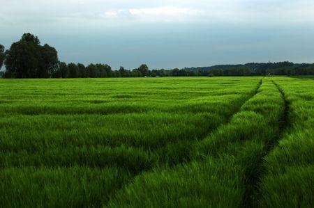 © Christian Unterdorfer: Auf dem Weg nach Hause fahre ich täglcih an diesem Feld vorbei. Dieses mal war das Feld grüner als sonst. Dazu kam noch die eindeutige Spur, die irgendwo im Hintergrund verschwindet.