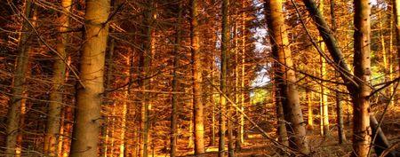Beschnittene Version, das Baumstamm-Panorama