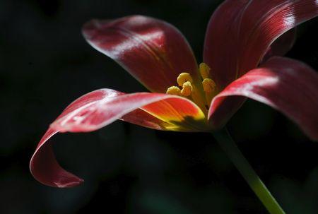Blumenfotografie: Die volle Tiefe nutzen