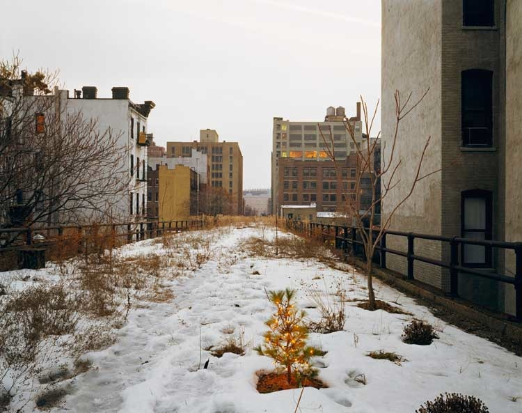 Joel Sternfeld: Ken Robson's Christmas Tree, January 2001