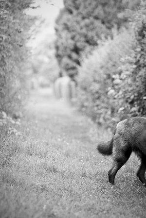 Konzeptfoto: Märchenbild mit Wolf