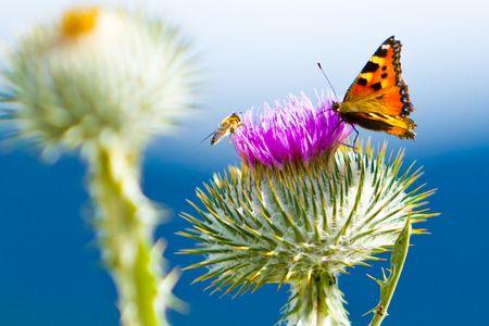 Naturfoto: Reines Farbenspiel