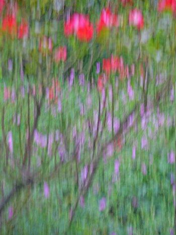 Blumenfotografie: Absichtlich unscharf