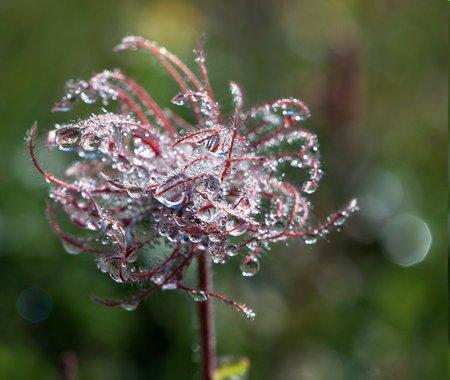 Naturfotografie: Blumen mit Wasserkraft