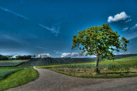 Leserfoto: Klick für Vollansicht (© Thomas Pfenninger).