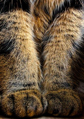 Haustierfoto: Gefährlicher Plüsch-Tiger