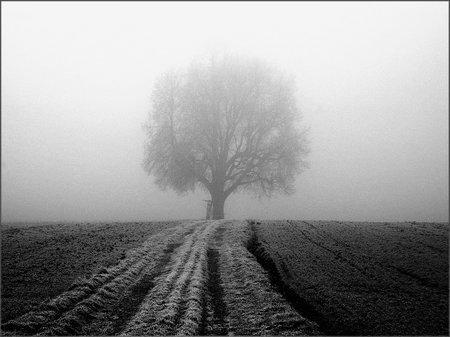 Das Bild des mittigen Baumes in Schwarz Weiss.
