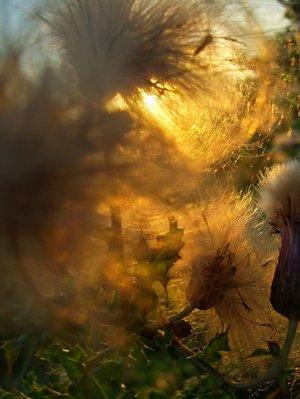 Leserfoto: Klick für Vollansicht (© Gisela Diederichs).