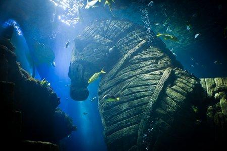 Unterwasserfoto: Trojanische Kreativität