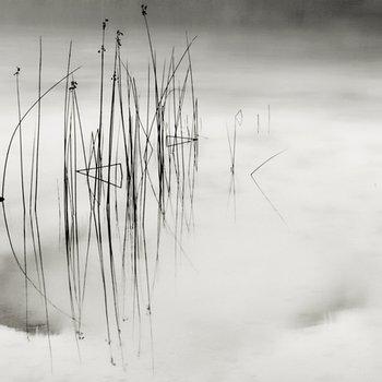 Natur in Abstraktion: Einfach gespiegelt