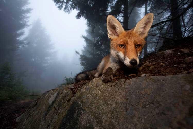 Trust © Klaus Echle/ Veolia Environnement Wildlife Photographer of the Year 2011
