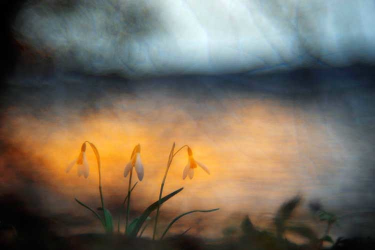 Harbinger of spring © Sandra Bartocha / Veolia Environnement Wildlife Photographer of the Year 2011 Nikon