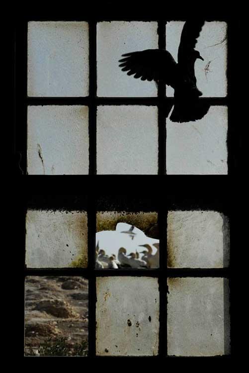 Window on new life © Thomas P Peschak / Veolia Environnement Wildlife Photographer of the Year 2011