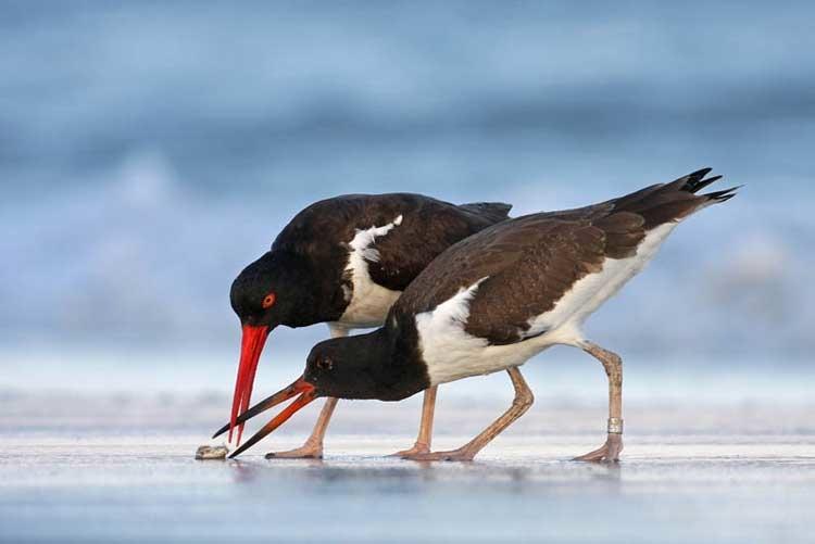 Pester Power © Mateusz Piesiak/ Veolia Environnement Wildlife Photographer of the Year 2011