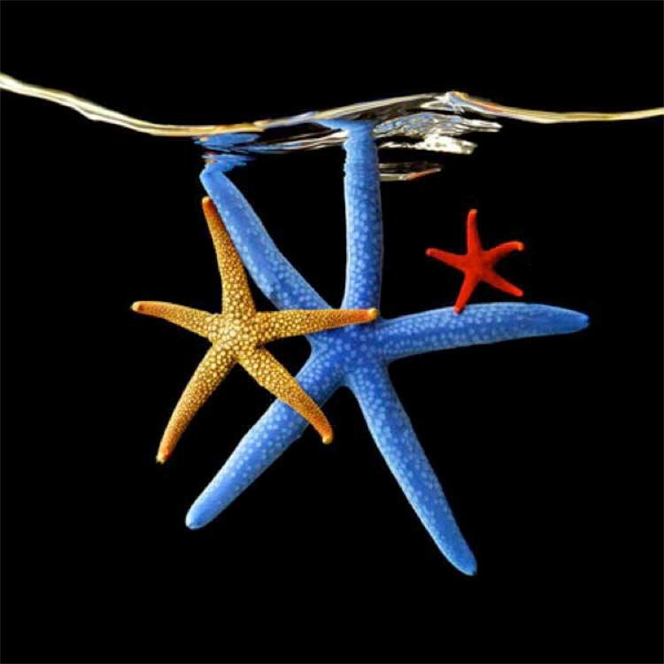 Mark Laita: Starfish, 2010
