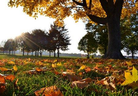 Landschaftsfotografie: Die Details der Herbstwiese