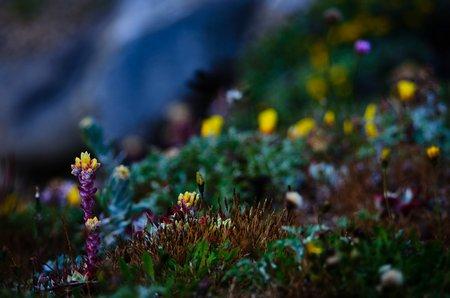 Versuch einer Landschaft mit Wildblumen - kalifornische Küste, 2010