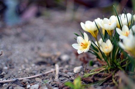 Naturfoto: Aug\' in Auge mit der Blume