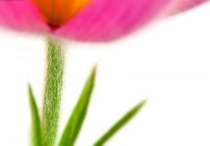 stengelblumenfoto.jpg