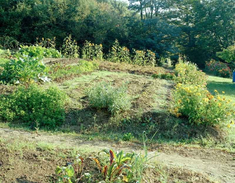 Simone Nieweg, Gemüsebeet mit Blumeneinfassung, Cravanche, Territoire de Belfort 2004