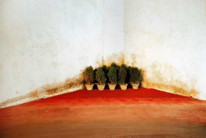 Feng Yan, Corner Bonsai, 2006