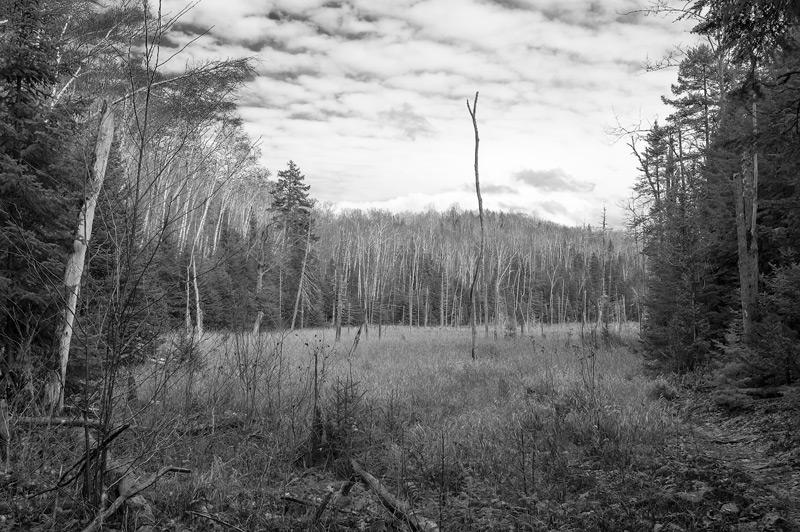 Leserfoto: Naturfoto in Schwarzweiß - Der Wald vor lauter Bäumen