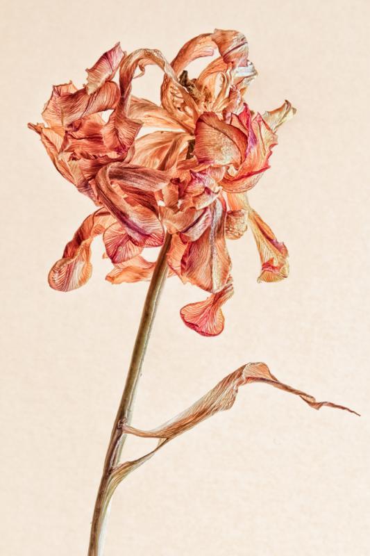 Stilleben aus Blüten der Vergänglichkeit