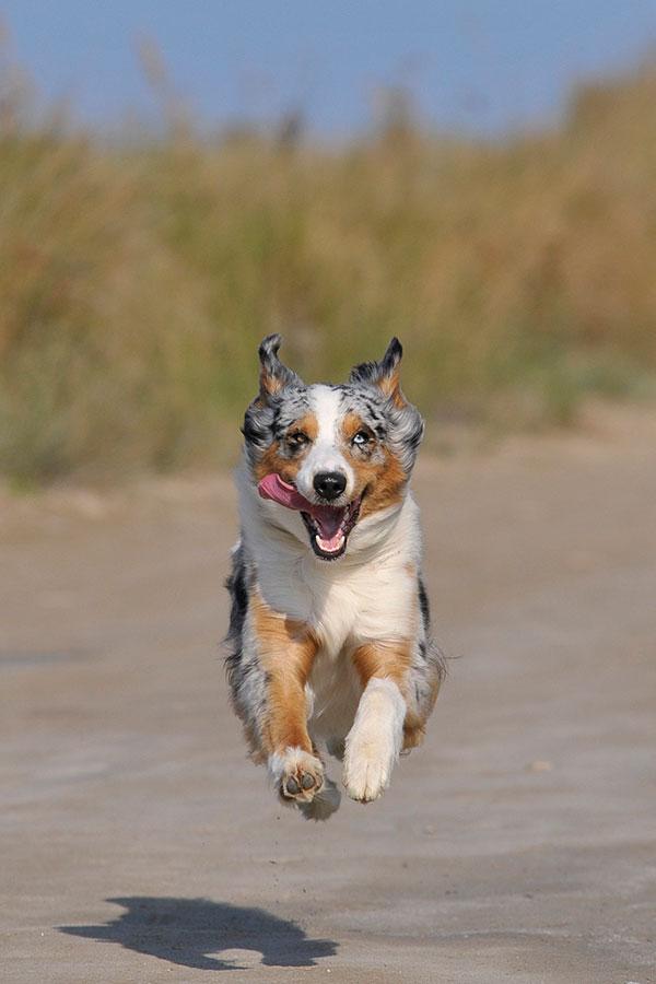Leserfoto: Haustierfotografie – Hund um High Noon