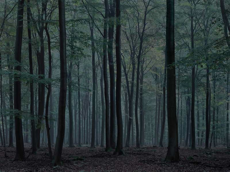 Michael Lange: Wald. Landschaften der Erinnerung, 2009