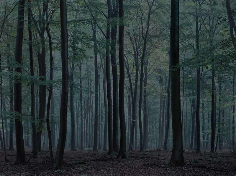 Michael Lange: Wald. Landschaften der Erinnerung, 2009