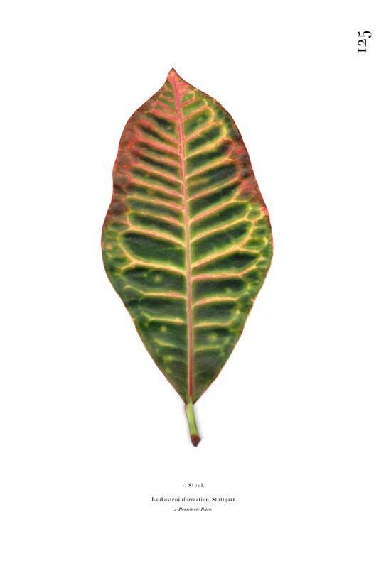 Saskia Groneberg - Büropflanze, Einzelblatt aus dem Buch. Foto Saskia Groneberg, www.guteaussichten.org