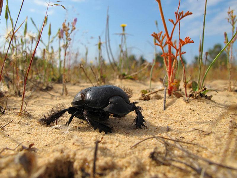Leserfoto: Der Alien-Käfer auf dem fremden Planten