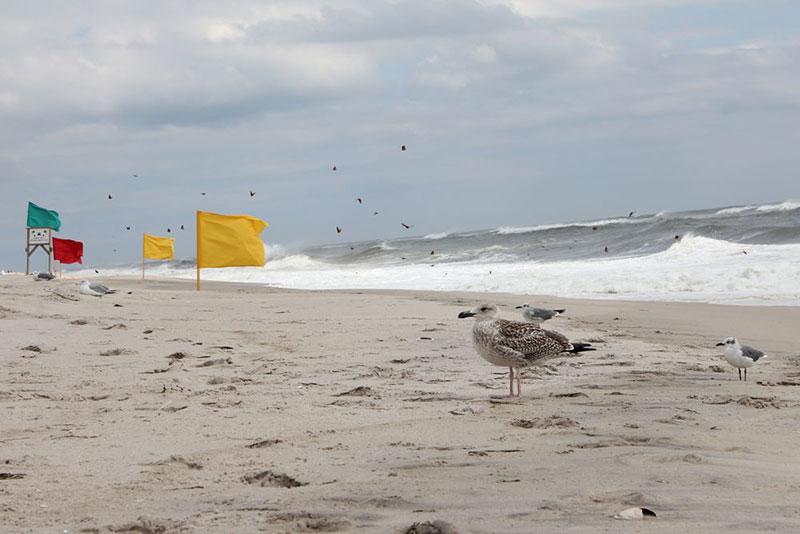Leserfoto: Standhafte Möwen - schräg im Wind